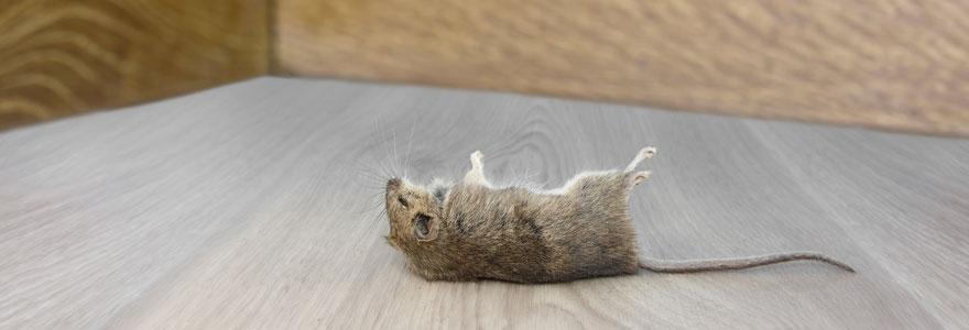 lutter contre les invasions de rats
