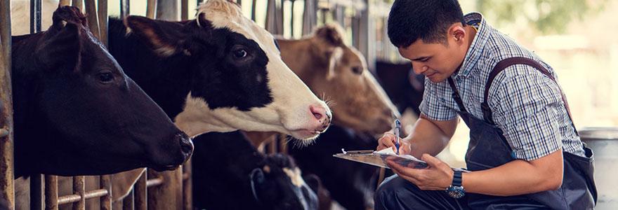 Audits d'élevage bovins